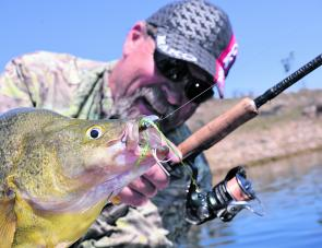 Soft plastics are spot-on for freshwater targets like golden perch, especially if the water is reasonably clear.