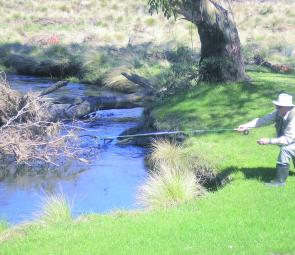 A guided fishing client fishing a promising corner of the Victoria River on the Mt Hotham High Plains.