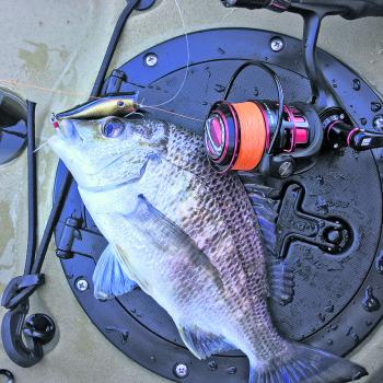 Bream are only going to get bigger over winter.