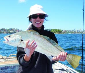 Jewfish have been abundant in Sydney harbour but if you think it can't get any better, wait until Autumn.