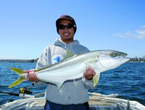 There are plenty of kingfish up around 80cm in the middle reaches of the Harbour and in Middle Harbour.