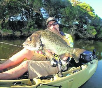 Thumping bream like this one is what has made the Tambo River famous.