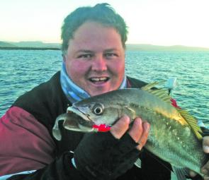 The author scored this baby jewfish on the Shoalhaven River on a soft plastic.