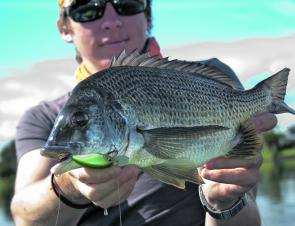 Bream will be on the cards this month in the lower estuaries. This one took an OSP Tiny Blits MR.