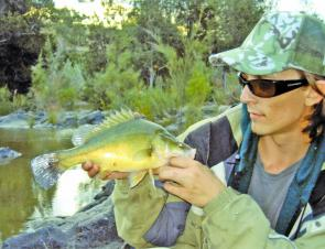 Golden perch can be surprisingly easily bluffed by a nipper-waving yabby unless they are really hungry. Remove the claws for best results.
