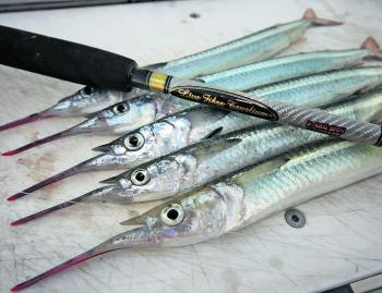 Garfish are great for the table too, so taking a bag home for a feed is a good idea!