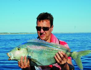 Blue morwong will pull a snapper backwards – just ask Steve!