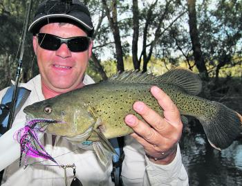Brett Corker with a trout cod of around 40cm. This fish was caught in Wangaratta where they are totally protected, but gives you an idea of what a 40cm trout cod looks like. Lake Sambell and Lake Kerford are the only places in the country where these fish