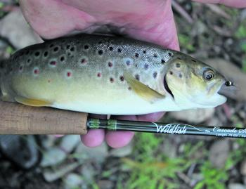 October is the best time of year to chase trout in the small streams.