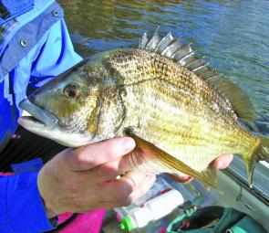 Derwent bream will soon be on the move as pre-spawning activity increases.
