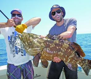 Gold spot cod are a common catch at shipwrecks and isolated structures.