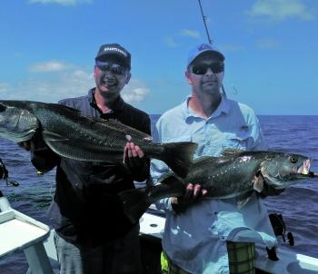 These two great mulloway swallowed livies.