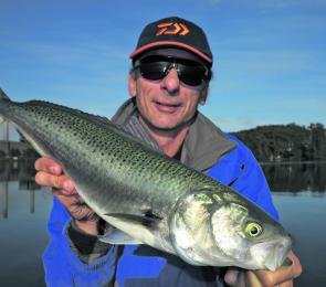 Salmon are going to be around in good numbers this month. The author hooked this one in the southern parts of Lake Macquarie where they have been abundant recently.