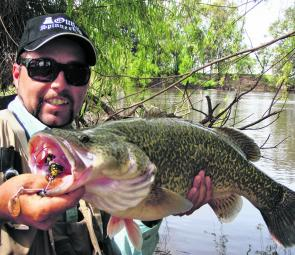 This Murray cod fell to one of the author's signature Outlaw spinnerbaits while the Murrumbidgee River was in high flow. Stick to backwaters behind large logs, eddies, creek mouths and on the insides of bends when the river is running hard.