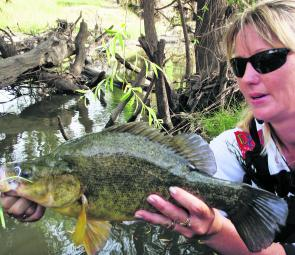 The author's other half, Sharon, with beautifully coloured golden perch she caught recently. The goldens in the lakes, rivers and creeks have been going great guns after a fairly poor Spring.