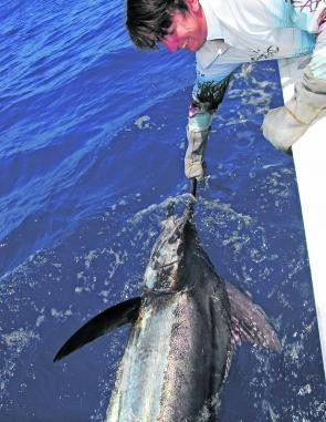Michael Green with a nice blue marlin. There have been plenty of blues around the 150kg mark out wider.