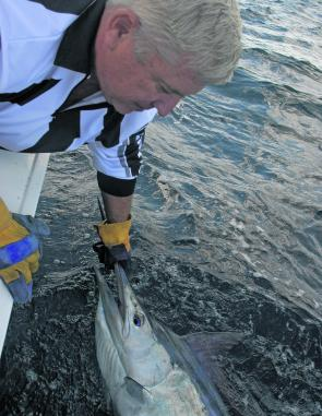 Mark Frendin with a black marlin. If the water stays warm they should be easily accessible from as close as the 12 fathom line.