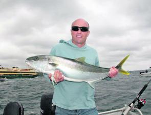 There's no shortage of kingfish and if current growth trends continue, Sydney anglers will be saving a few bucks on New Zealand airfares inside of five years.