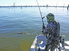Sandy Hector with a 70cm Murray cod on in Lake Mulwala. This battle ended in tears as the fish was dropped right beside the boat!
