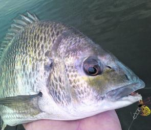 Bream are one of the main species worth fishing for as we move closer to Winter.