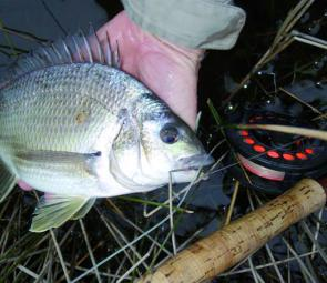 Glenelg River bream caught by Jim Bambridge. (Photo courtesy Jim Bambridge)