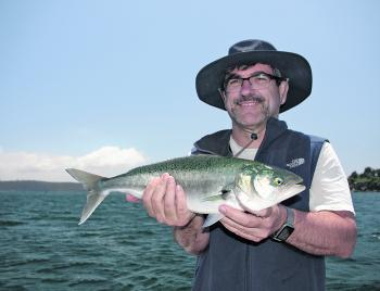 Aussie salmon have been around in huge numbers this season.