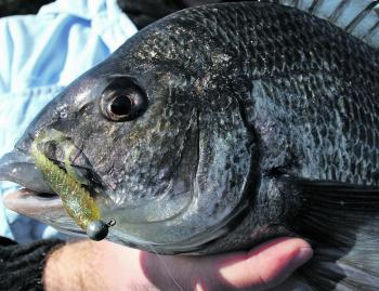 Squidgy wrigglers are still a favourite for many bream anglers.