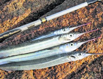 When targeting garfish, a float setup is the most productive rig to use.