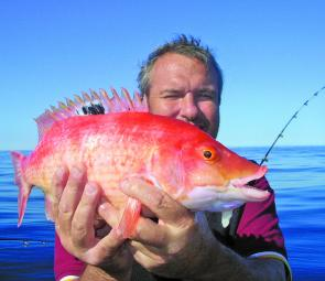 Pigfish are among the tastiest fish in the ocean.