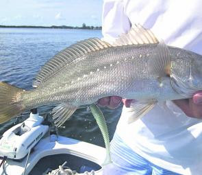 This small jewfish added a whole new meaning to the term 'bottom fishing'.