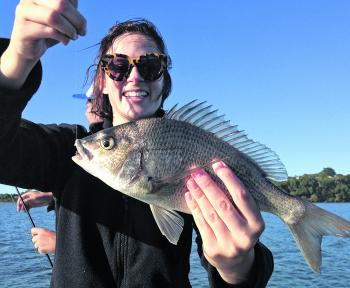 There has been no shortage of bream caught!