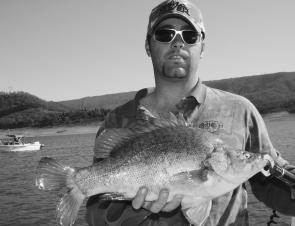 This 52cm golden perch caught at Blowering Dam had the author confused. Goldens don't have forked tails, do they?