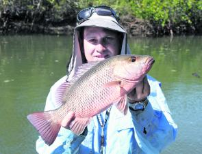 The author with a typical November mangrove jack. Take note of the thick shoulders, these things fight well above their weight.