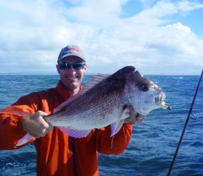 Plenty of snapper are being caught right now off Noosa. This one caught was on a Snap Back plastic on Sunshine Reef aboard a Fishing Offshore Noosa charter.