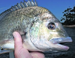Some quality bream can be found in the lake feeder streams and around the weed beds this month.