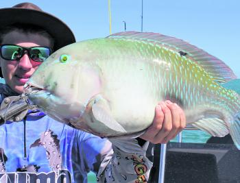 Black-spot tuskies on handline gear is no easy feat!
