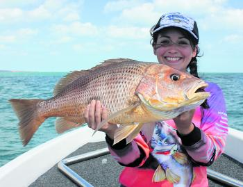 Golden snapper make regular appearances over the shallow reefs around winter.