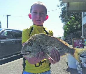 Young Brock with a cracker Tarwhine from the Harrington lagoon