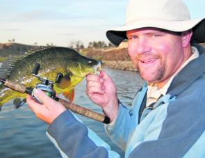 Early season golden perch can be tricky – a high barometer reading is a must when chasing them.