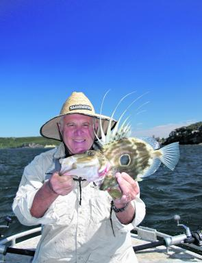The author theorises that there has been a cold undercurrent off Sydney and in the Harbour this year, making the water suitable for john dory.