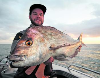 This snapper was recaptured just six days after being tagged.