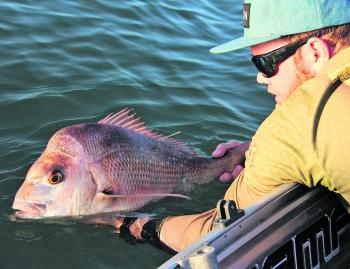 Catch, tag and release plays a big part in the author's snapper fishing.
