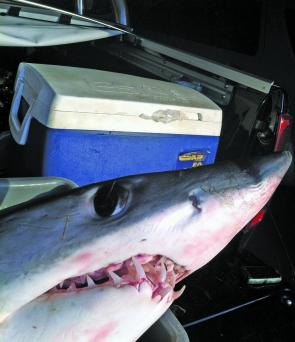 Mako sharks are high on the offshore agenda this month.
