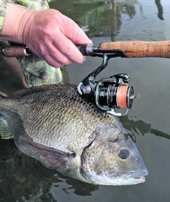 Light, sensitive spinning gear based around a 1000 to 2500 reel and 1.9 to 2.2 m flick rod is perfect for bream.
