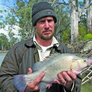 Steven Centofanti, from Berri South Australia, with a typical spring yellowbelly caught on worms and shrimps in the shallows.