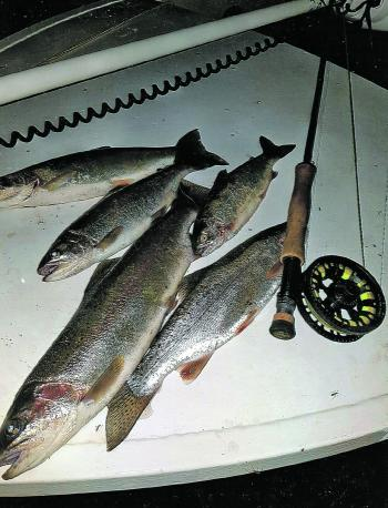 Some good bags of browns and rainbows have been taken in Eucumbene on fly, mostly in the late afternoon and at night.