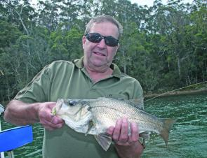 This beaut 43cm estuary perch from Wagonga Inlet which was released in super condition.