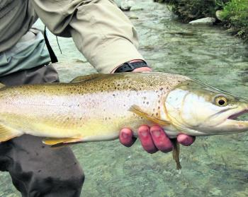 Big trout are on offer this time of year, and they'll be hungry!
