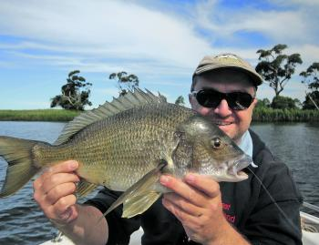 Bream are a common catch for all anglers. Flicking the snags is where you'll find them schooled up.