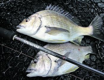 If you're going to search for bream, ensure your using the right gear.